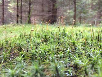 forest by Waronicuke