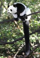 Giant Lemur by Dwarf4r