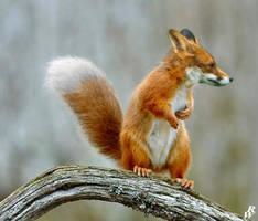 Fox Squirrel by Dwarf4r