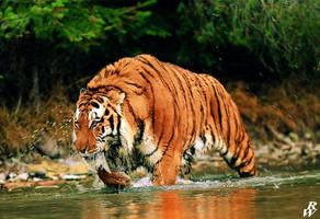 Sabretooth tiger by Dwarf4r