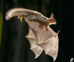 Flying Squirrel by Dwarf4r
