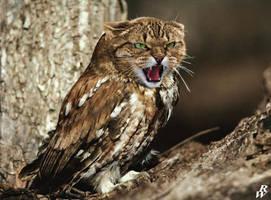 Cat Owl by Dwarf4r