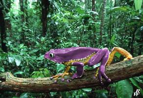 Purple Laker by Dwarf4r