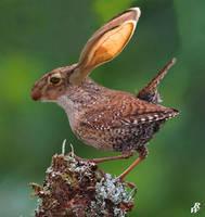 Big-eared wren by Dwarf4r