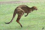 Marsupial Cheetah by Dwarf4r