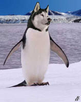 Siberian penguin by Dwarf4r
