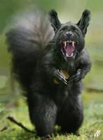 Black squirrel by Dwarf4r