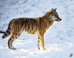Canis tigris by Dwarf4r