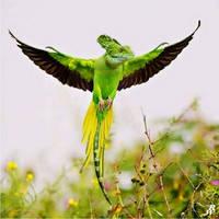 Flying green lizard by Dwarf4r