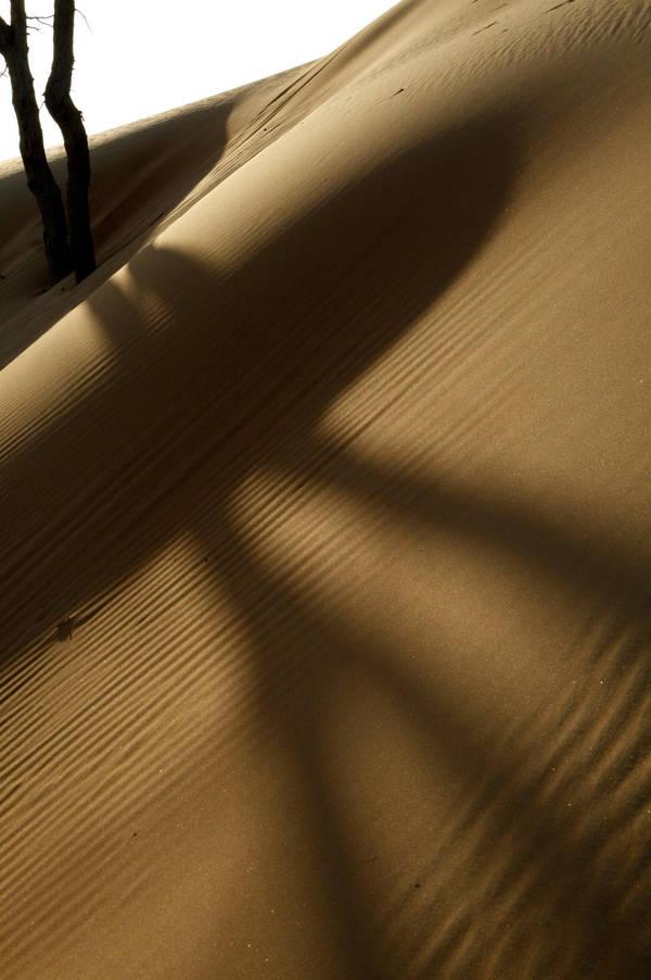 Shadows of the Desert by UAEzPrecious