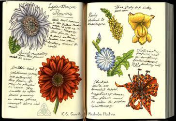 Lycanthropus Flowers by Nashoba-Hostina