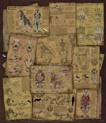Werewolf Anatomy by Nashoba-Hostina