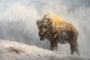 Buffalo Oil Painting by stevegoad
