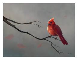 Male Cardinal by stevegoad