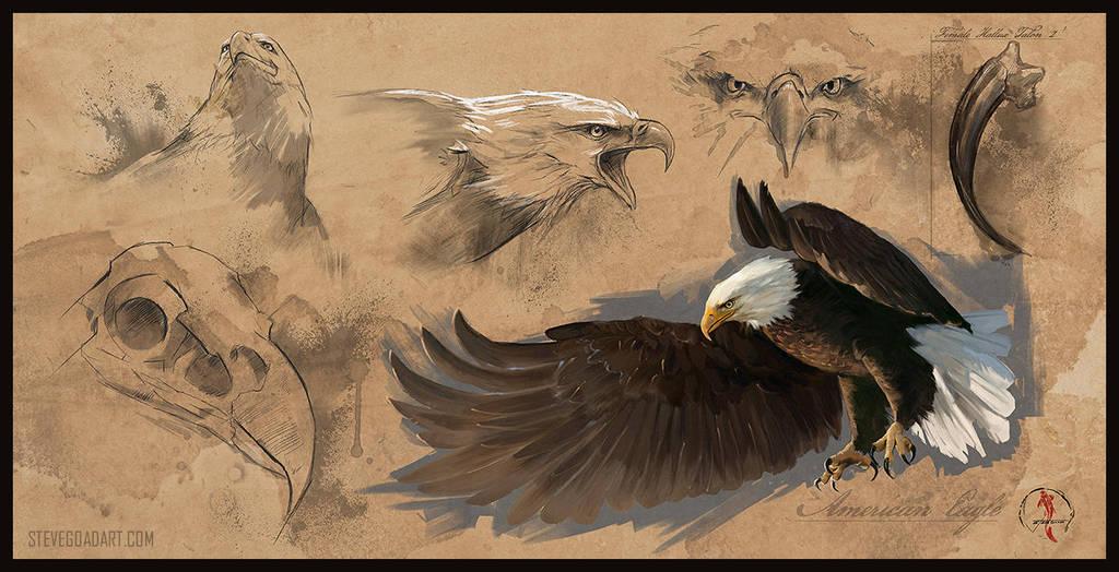 Bald Eagle Study Sheet by stevegoad