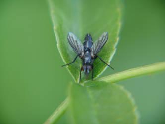 Cyberbug by rygir