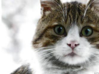 kis kedisi - winter cat by alliserdem