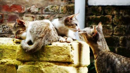The Kiss by suneetsankar