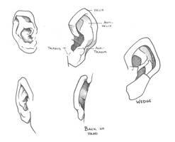 Ear Study by Sariel367