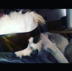 The Coolest Pup by LyricalAutumnWind