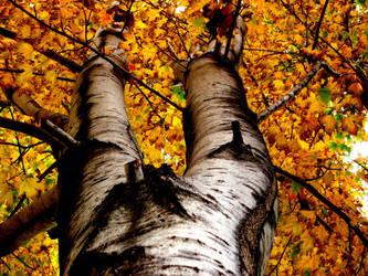 Burned Tree by Espeakus