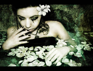 Plumeria sadness by Mersi