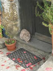 Cat in Calcata 1 by SciFiRocker