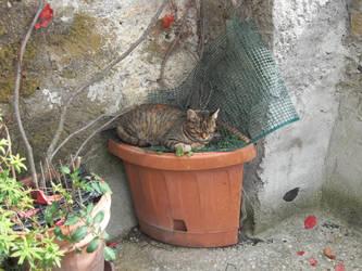Cat in Calcata 2 by SciFiRocker