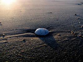 Shell by hypurlilone