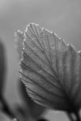Leaf by hypurlilone