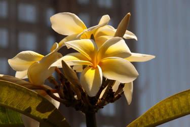 Royal Botanical Gardens - Yellow Flowers by Stirk-Bostaurus