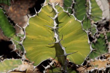 Royal Botanical Gardens - Cactus by Stirk-Bostaurus