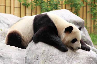 Floppy Panda by Stirk-Bostaurus