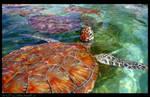 Hawksbill Turtle by ZenAkita