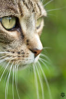 Intense Kitty.. by shaybo88