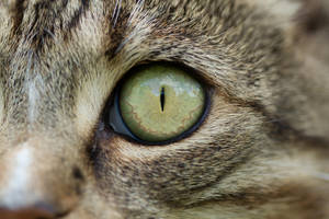 Cats Eye HiRes by shaybo88