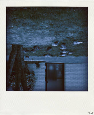 pigeons. by Spincia