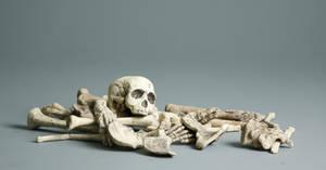 Bones - 1 by mjranum-stock