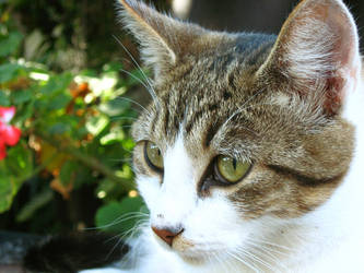 Catseye by indulging-inaccuracy