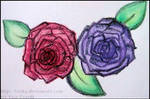 Roses by Tosita