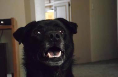BoBo Smiling for me by SilentDeathKiller