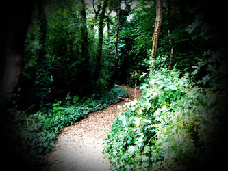 Into the woods by AnnieRG