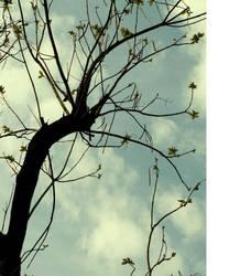 air d'arbre by RetardSock