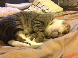 the sleeping cat by AbjectBigfoot7n