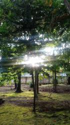 sol entre las ramas  by EdyMozo1