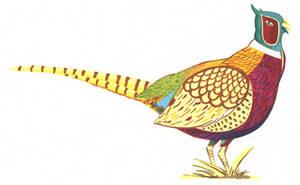 Pheasant by Call-Me-CCB