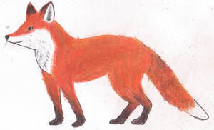 Red Fox by Trillstar