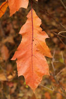 Leaf Texture - 1 by AGF81