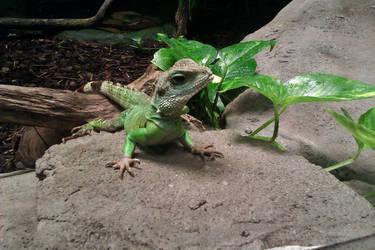 Lizard by sturmsoldat1