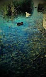 Ducks by LabelaArt